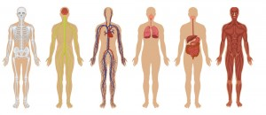 Systems_human body